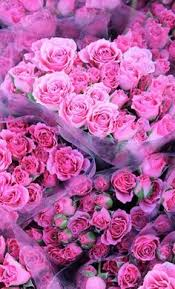 Pink Roses So perfect ⭐️Hot Pink⭐ Pinterest