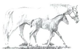 Horses Coloring Pages Quarter Horse A Bath Time And Foal Spirit Rain