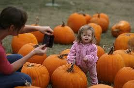 Pahls Pumpkin Patch pahls pumpkin patch buckley michigan contact information
