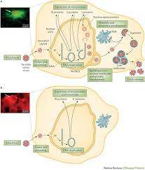 varicella zoster virus infection nature reviews disease primers