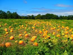 Woodside Pumpkin Festival by Top Spots For Long Island Pumpkin Picking