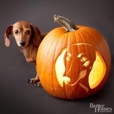 Halloween Stencils For Pumpkins Free by Free Pumpkin Carving Stencils Of Favorite Dog Breeds