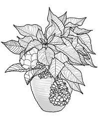 Poinsettia Flower Beautiful Bouquet Coloring Page