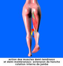 douleur interieur genou course a pied ischio jambiers les muscles de l arrière de la cuisse