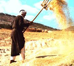 Threshing Floor Bible Meaning by 2nd Sunday Of Advent 9 Things To Know And Share