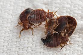 20 Questions about Bed Bugs