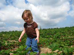 Cal Poly Pomona Pumpkin Patch Promo Code by Strawberry Picking Farms Near Los Angeles