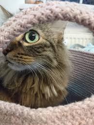 eigentlich ist der korb ja für decken kissen gedacht
