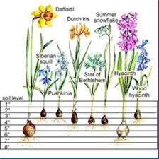gardening naturally with planting blooming flowers