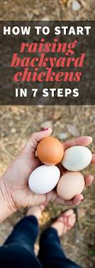 How To Start Raising Backyard Chickens In 7 Simple Steps - Wholefully Best Backyard Chickens For Eggs Large And Beautiful Photos 4266 Best Backyard Chickens Care Health Images On Pinterest Raising Dummies Modern Farmer Eggs Part 1 Getting Baby Chicks For 1101 Emma Chicken Breeds And Meat With 15 Popular Of Archives Coffee In The Cornfields Balancing Mrs Simply Southern The Chick Handling Storage Of Fresh From Laying Brown 5 Hens Your