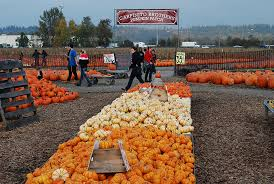Central Wisconsin Pumpkin Patches by Carpinito Brothers Pumpkin Patch Fun In Kent Seattle Bloggers