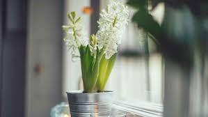 pflanzen im schlafzimmer gehören zimmerpflanzen nebens bett