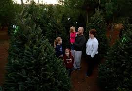 Christmas Tree Hill Shops York Pa by 9 Charlotte Area Farms Offer Cut Your Own Christmas Trees