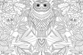 Owl Coloring Page Adult Club