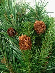 Vickerman Christmas Tree Topper by Amazon Com Vickerman Cheyenne Tree 115 Tips And Cones 36 Inch By