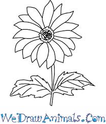 chrysanthemum flower thumb