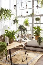 diese zimmerpflanzen sorgen für gute raumluft mein eigenheim