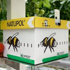 bumble bees for sale free shipping planet