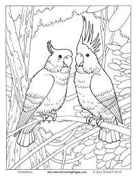 Free Jungle Bird Coloring Pages For Adults