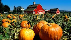 Pumpkin Picking Farms In Maryland by 12 Of America U0027s Best Pumpkin Patches To Visit This Fall Cocoro