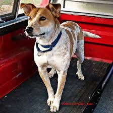 Cami, Truck Dog By Perfesser-bear On DeviantArt A Food Truck For Pets Is Coming To Boston Magazine Dogs Die Falling Off Pickup Trucks Trucking With A Dog What Drivers Should Know About Furry Pickups Pickup Truck Dog Rudy Photograph By Tara Cantore Blue Wall Art Bromi Design Pick Up Pal Cool Stuff Driving Behind The Steering Wheel Of Lorry Stock Debbis Front Porch Dawgz The Dangers In Beds 1800petmeds Cares Novel Four Bites Hc Thrifty Teachers