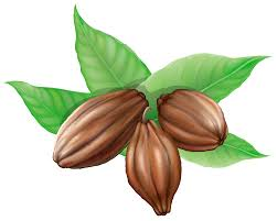 Cocoa Beans PNG Clipart Picture