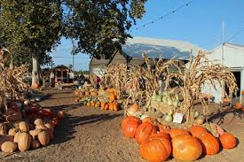 Mckee Ranch Pumpkin Patch 2015 by Parks Zoos Museums U2014 Merced County Events