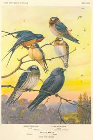 The 25+ Best Barn Swallow Ideas On Pinterest | Pretty Birds, Blue ... Bird Nest Idenfication Identify Nests How To Get Rid Of Swallows Best 25 Barn Swallow Ideas On Pinterest Pretty Birds Blue Bird Tree Have Returned From Migration To In Gourds Stained Glass Window March 2017 Cis Corner F June 2012 Nextdoor Nature Stparks Roosting For The Love Birds Easy Tips Attract Swifts And Martins True Life With God Hard Swallow Avian Explorer Blog Archive Babies Cottage Country Reflections Darou Farm Site Demolition Is Hold