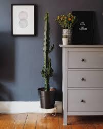 mein kleiner grüner kaktus cactus plants so