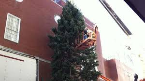 45 Foot Evergreen Wins Perfect Christmas Tree Contest