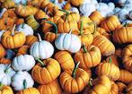 Myers Pumpkin Patch Dalhart Tx by Pumpkin Patch Myers Pumpkin Patch Greeneville Tn Home