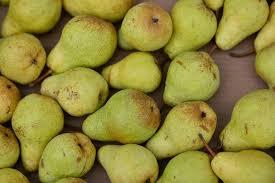 si e poire fruits une bonne récolte en poires d été