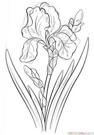 How To Draw An Iris Flower Step By Drawing Tutorials For Kids And Beginners