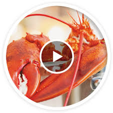 cuisiner homard congelé tout sur le homard ricardo