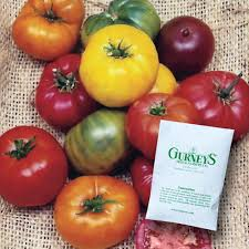 100 Heirloom Food Truck Gurneys Tomato Rainbow Blend 30 Seed Packet73592 The