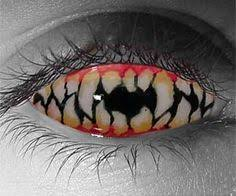 Cheap Prescription Halloween Contacts Canada by Timber Wolf Quebec Canada Wildlife Quebec Canada Pinterest