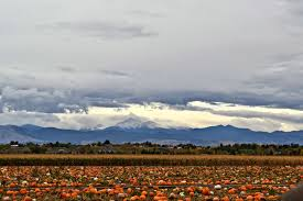 Pumpkin Patch Denver 2015 by Visiting Anderson Farms Fall Festival In Erie Colorado Building