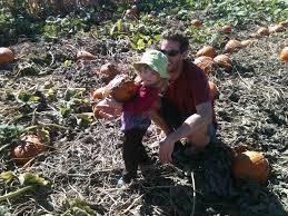 Pumpkin Patch Dixon Ca by Pick A Patch Of Pumpkins Farmophile