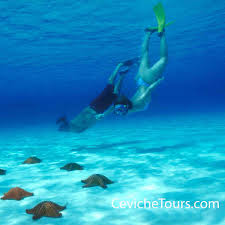 Sea Turtles And Snorkeling In Cancun Possible Storyline For Kids