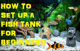 Spongebob Aquarium Decor Set by How To Set Up A Coldwater Tropical Freshwater Fish Tank Aquarium