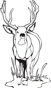 Unique Deer Coloring Pages 66 With Additional For Kids Online