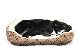 kong lounger dog bed restate co