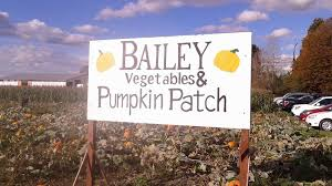 Best Pumpkin Patch Snohomish County by Jubilee Farm Pumpkin Patch Review Carnation Wa