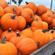 Pumpkin Patch Green Bay Wi by Pearce Farm Stand