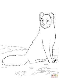 Dibujo De Zorro Ártico Sentado Para Colorear Dibujos Para Colorear