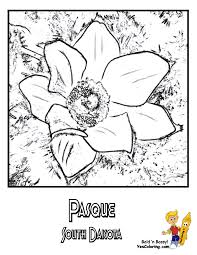 South Dakota Pasque Flower Coloring At YesColoring