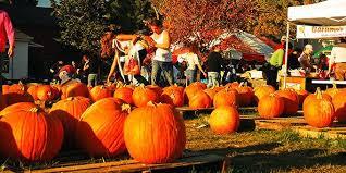 Pumpkin Patch Chesapeake Va by Virginia Fall Festivals