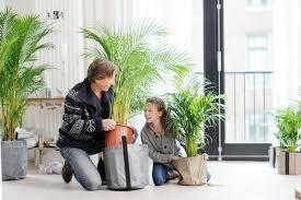 die richtige zimmerpflanze für das kinderzimmer pflanzenfreude