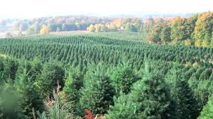 Christmas Tree Species For by Why Irrigation Is Important For Christmas Tree Production Youtube