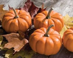 Connecticut Field Pumpkin For Pies by Pumpkins Planting Growing And Harvesting Pumpkin Plants The